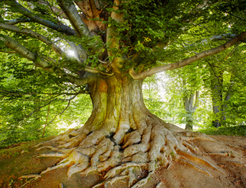 3 Things You Didn't Know Trees Did for You
