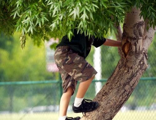The Importance of Trees; KidZone